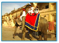 Elephant Safari, Jaipur Vacation Packages