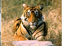 Wildlife India Tours